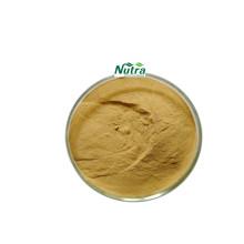 Bio-Olivenblattextrakt-Pulver