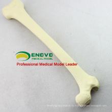 Оптовая имитация кости 12318 искусственные кости скелета Swabone имплантат практика модель