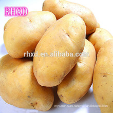 hot selling fresh potato from china fresh holland patato