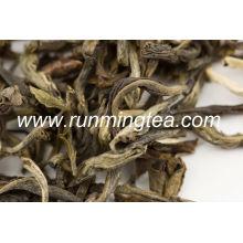 Extracto de té de jazmín
