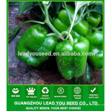 NSP241 Qusi hybrid quality capsicum seeds for open field