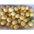 Fresh Citrus fruits, fresh lemons, fresh navel and Valencia oranges From China