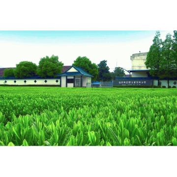Японский оптовый паровой GreenTea Bancha