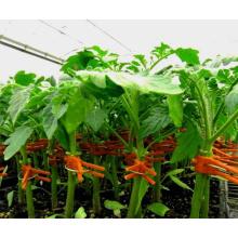 Высокое качество красный цвет пластиковый зажим для сельскохозяйственных прививкой