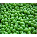 IQF Frozen Vegetables of Green Beans Cuts (Chinese)