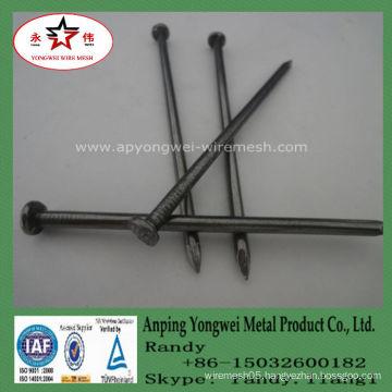 YW--Common Nail Iron Nail Factory