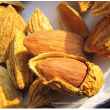 Size 18/20 Shelled Almonds/ 100% Natural Almonds/ Roasted Almonds in Shell
