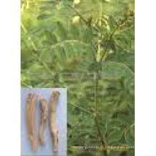 1% Extrait Astragalus et 50%, 98% Extrait de Rhubarbe