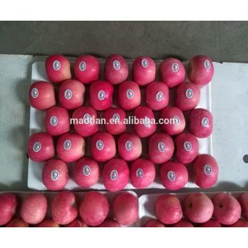 Китай оптовик свежий Фудзи яблоко в яньтай