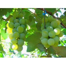 Frutas Conservas de uva en jarabe ligero / pesado (China)