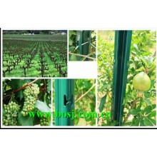 Uso del poste del viñedo para el surtidor de la máquina formadora del rollo de la plantación de la uva Tailandia