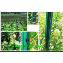Utilisation du poste de vignoble pour le fournisseur de machines à former des rouleaux de plantation de raisin Thaïlande
