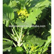 MPK22 Catian bom sabor pakchoi sementes f1 híbrido para o plantio