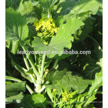 MPK22 Catian хороший вкус капуста китайская семена гибрид F1 для посева
