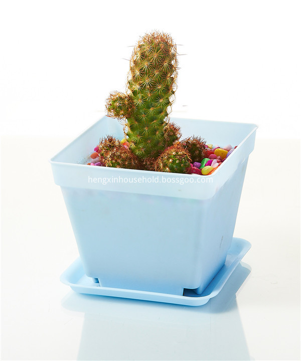 succulent plants and Cactus