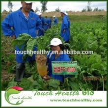 Touchhealthy supply beet seeds/Beta vulgaris seeds/forage grass seeds