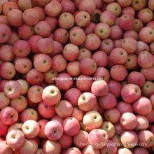 Gute Qualität frischen Qinguan Apfel, frischen Apfel
