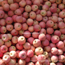 Good Quality Fresh Qinguan Apple, Fresh Apple