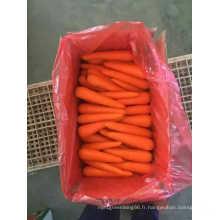 100% nature plante carotte fraîche de Chine