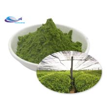 Hot Sale Matcha Organic Matcha Green Tea Powder