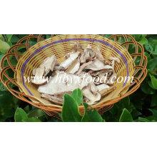 Setas de Porcini salvajes frescas secadas frescas de calidad superior