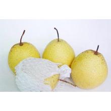 Provide Fresh Regular Snow Pear
