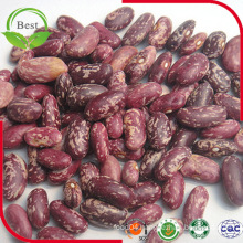 Purple Light Red Speckled Kidney Beans