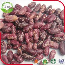 Фиолетовые светло-красные пятнистые бобовые бобы