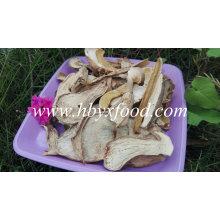 Hongos porcini orgánicos secos de Yunnan
