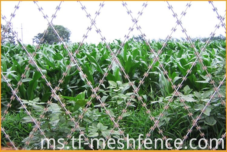 welded concertina razor wire mesh