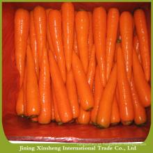 Cenouras legumes frescos