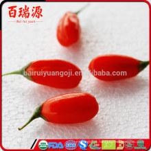 China blushwood berry ningxia goji baga dragão ervas goji berry