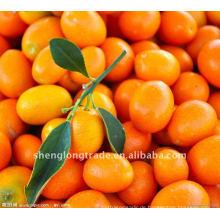 Süße frische Zitrus Orange