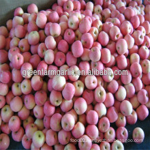 new qinguan apple price