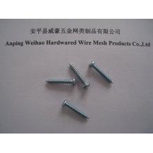 China Schraubenzieher Hersteller geschlitzt Drives Kopf Blechschraube Schraube bule verzinkt