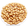 Best Selling 800g Canned Beans in Tomato Sauce