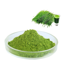 Pure natural Water Soluble green barley grass extract Barley grass Juice Powder