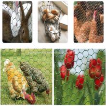 Chicken and Rabbit SS Hexagonal Wire Mesh