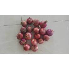 Oignon indien prix de l'oignon rouge