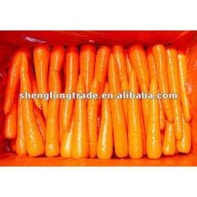 Spécification de la carotte fraîche 2012