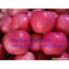 New Crop FUJI Apple
