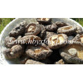 Classifique um Cogumelo Shiitake Natural Seco