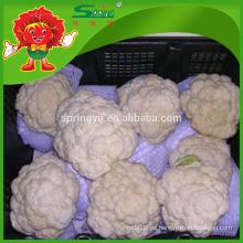 Coliflor de grado superior sin residuo brócoli blanco fresco