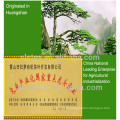 Gunpowder tea price per kg factory directly supply wholesale