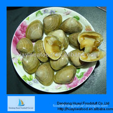 wholesale fresh frozen surf clam seafood