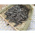 2017 chinesische neue getreide hybrid bulk schwarz sonnenblumenkerne ernte schwarze sonnenblumenkerne 361