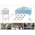 Chicken Automatic Main Feeding Line From Superherdsman