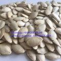 New Crop Raw Pumpkin Seeds Confectionary Grade