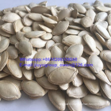 New Crop Raw Pumpkin Seeds Confectionary Grade