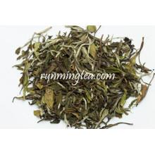 Organische weiße Pfingstrose weißer Tee
